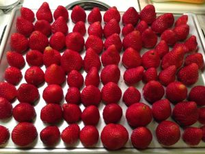 strawberries on cookie sheet